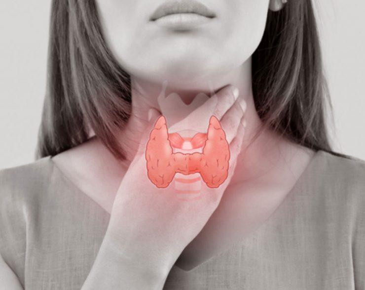 الغدة الدرقية ودورها في جسم الإنسان ومشاكلها وكيفية علاجها